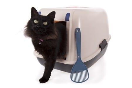 Das Reinigen der Katzentoilette ist für viele ein Graus